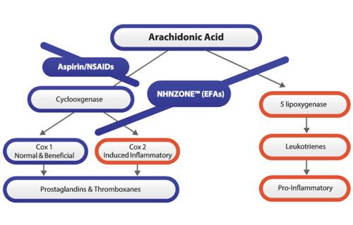 Essential Fatty Acids Profile